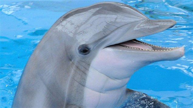 dauphin ile maurice